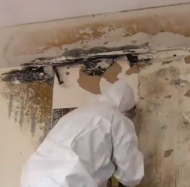 Mold Removal and Remediation article image